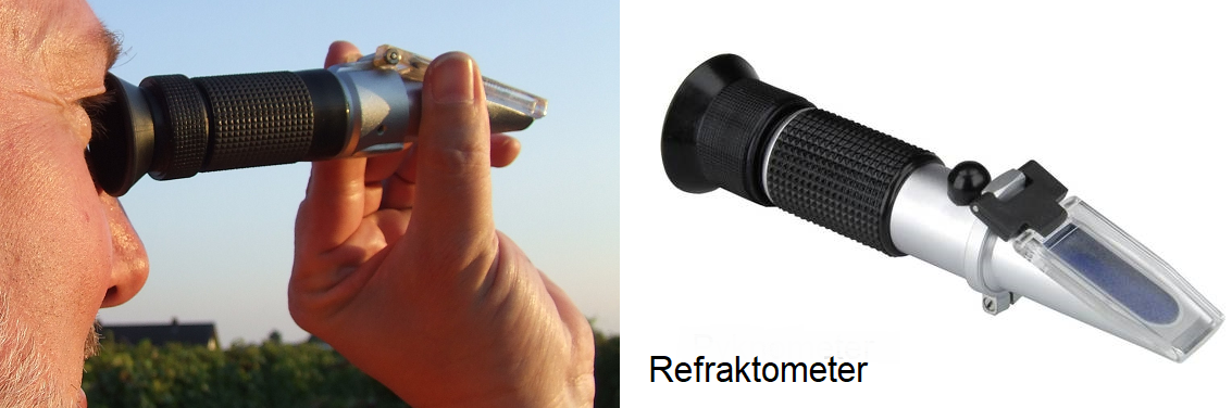 Mostgewicht - Messunf in the vineyard and refractometer