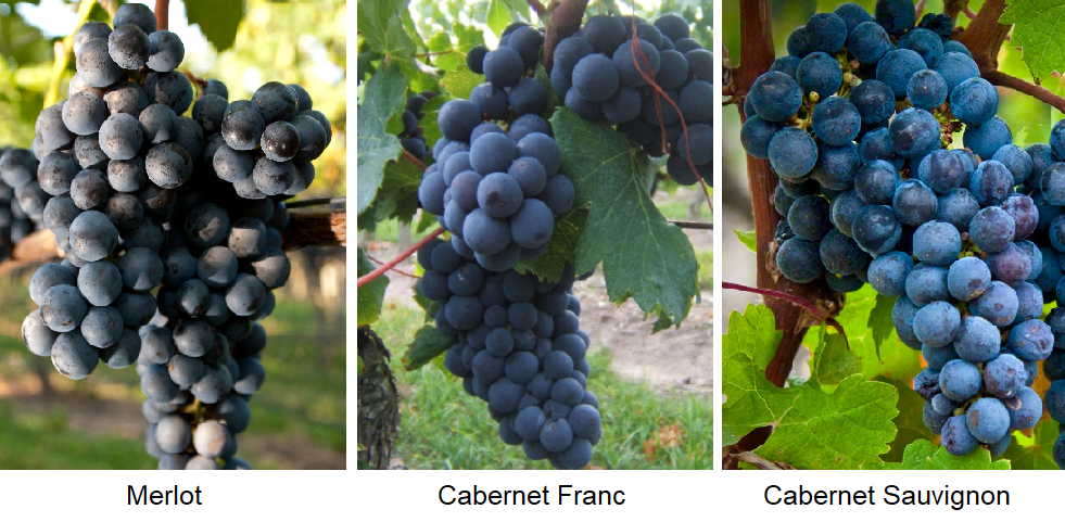 Rive droite - Grapes Merlot, Cabernet Franc, Cabernet Sauvignon