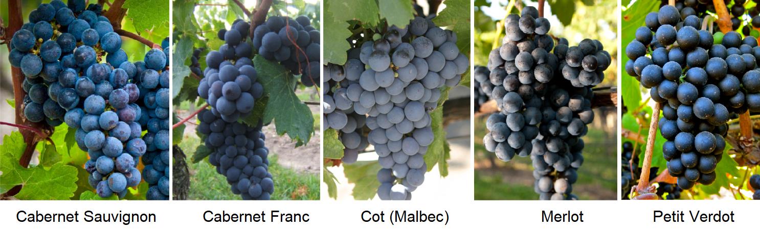 Rive gauche - Cabernet Sauvignon, Cabernet Franc, Cot (Malbec), Merlot, Petit Verdot