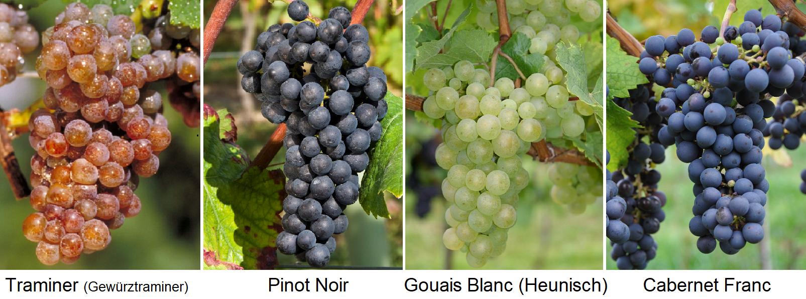 Lead varieties: Traminer (Gewürztraminer), Pinot Noir, Gouais Blanc (Heunsich), Cabernet Franc
