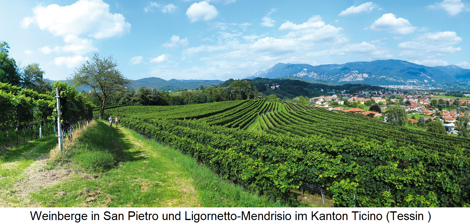 Ticino - Vineyards San Pietro and Ligornetto-Mendrisio