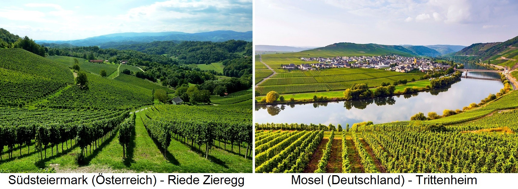 Winegrowing - South Styria Riede Zieregg and Mosel Trittenheim