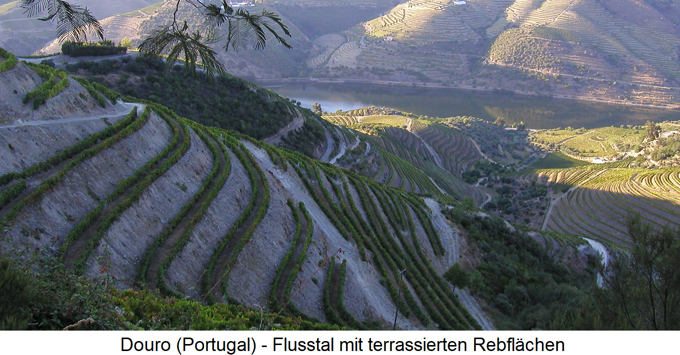 World Heritage - Douro valley with terraced vineyards