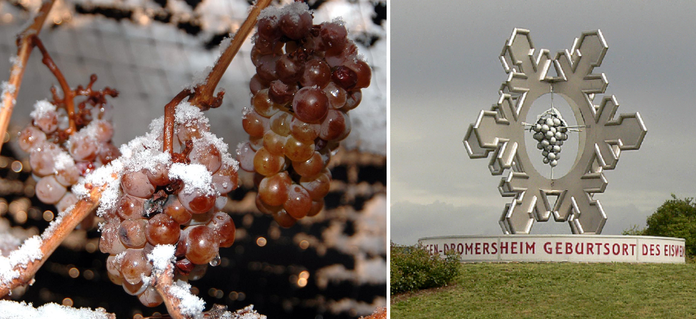 Eiswein - frozen grape and monument near Dromersheim