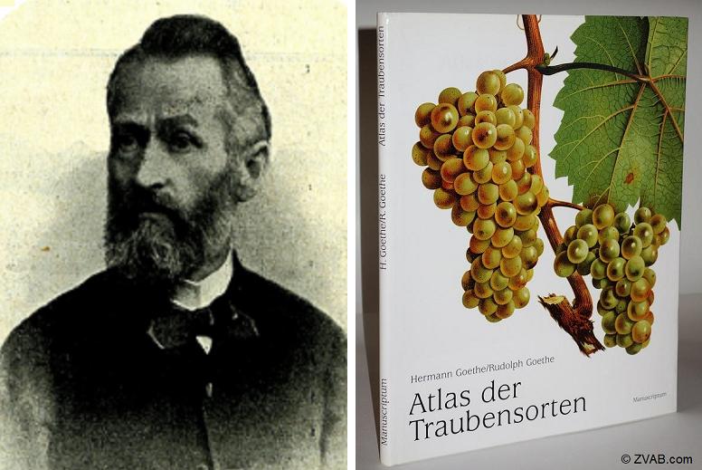 Goethe Hermann - Portrait and Atlas of Grape Varieties