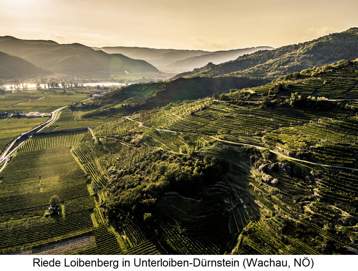 Loibenberg - Unterloiben-Dürnstein (Wachau, Lower Austria)