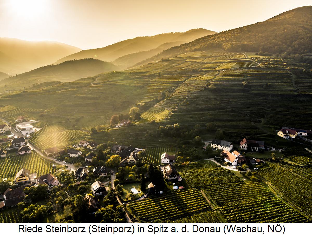 Steinborz - Wachau