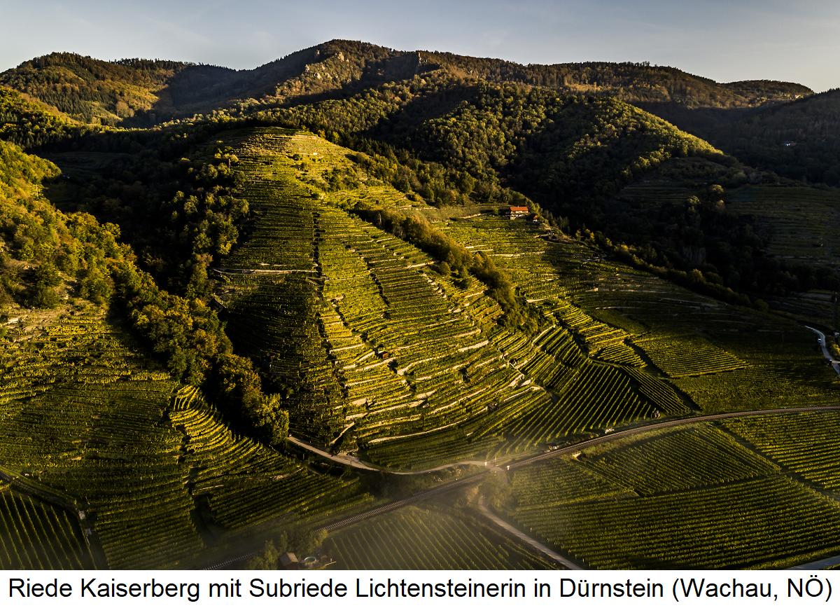 Kaiserberg with Subriede Lichtensteinerin in Dürnstein (Wachau, Lower Austria)