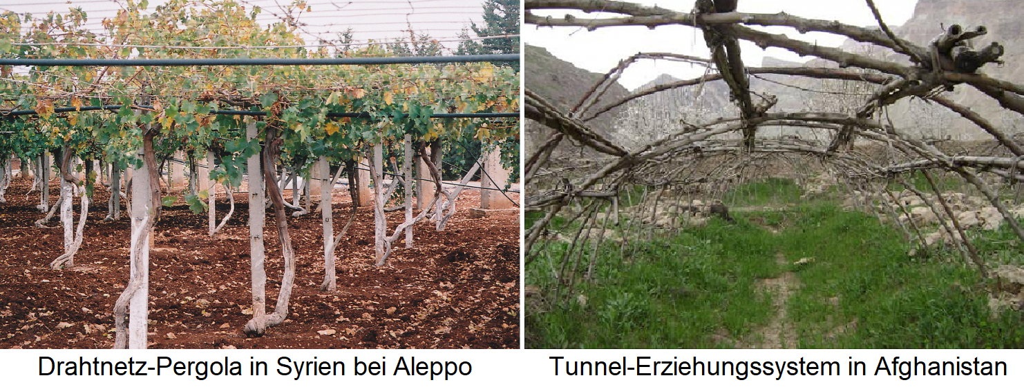 Wire mesh pergola in Syria at Aleppo / tunnel education system in Afghanistan