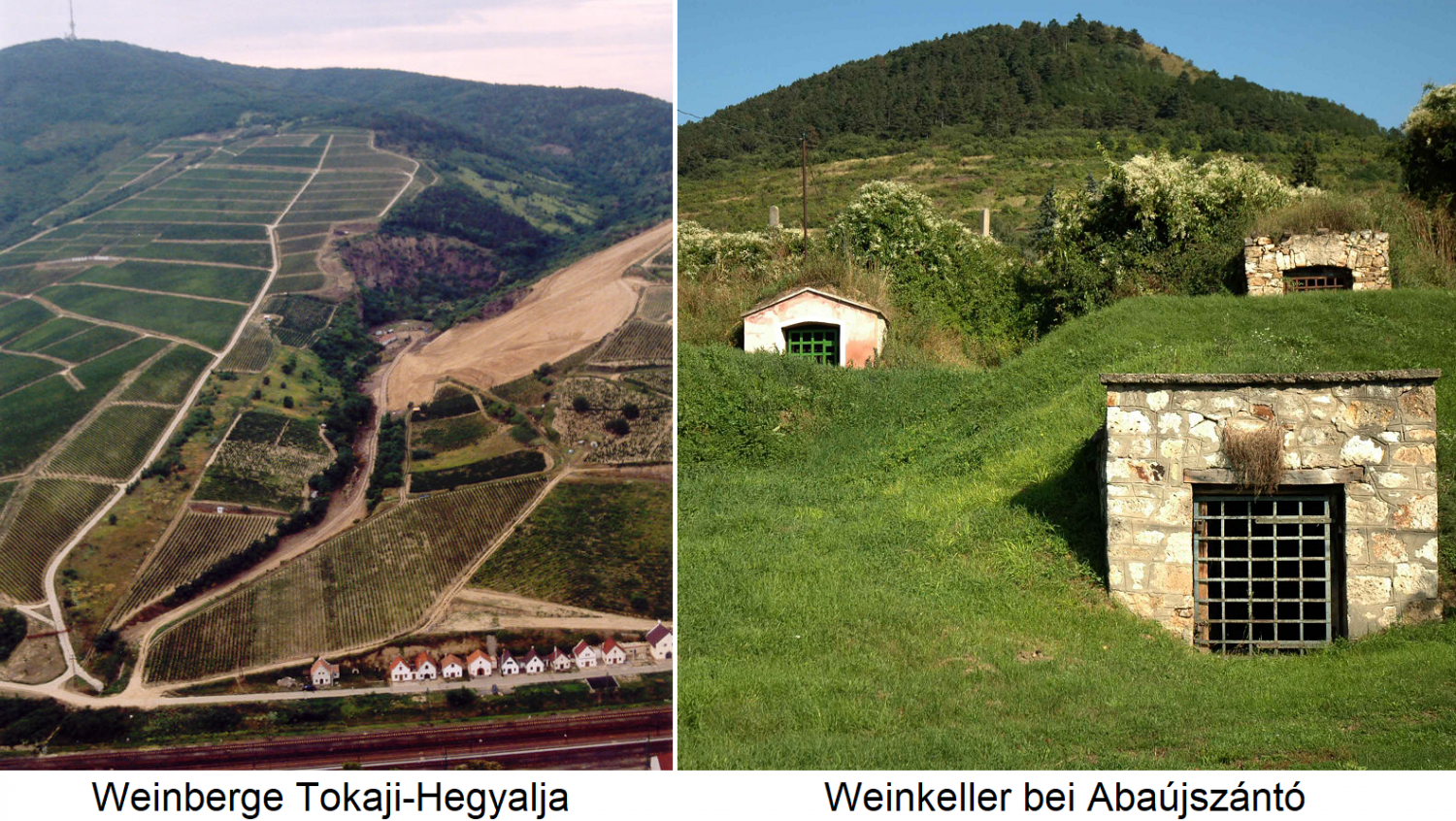 Tokaj - Tokaji-Hegyalja vineyards and wine cellars at Abaújszántó