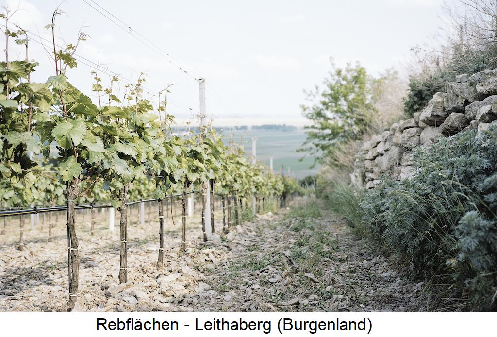 Nittnaus Anita & Hans - Weingarten Leithaberg