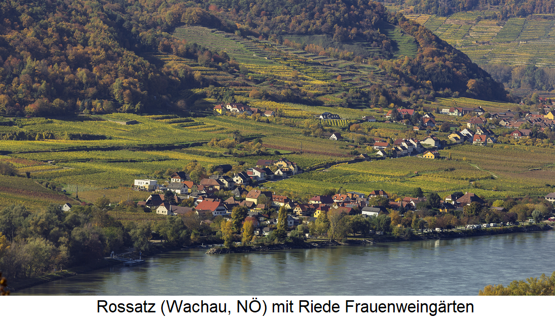 Women's vineyards - Rossatz (Wachau, Lower Austria)