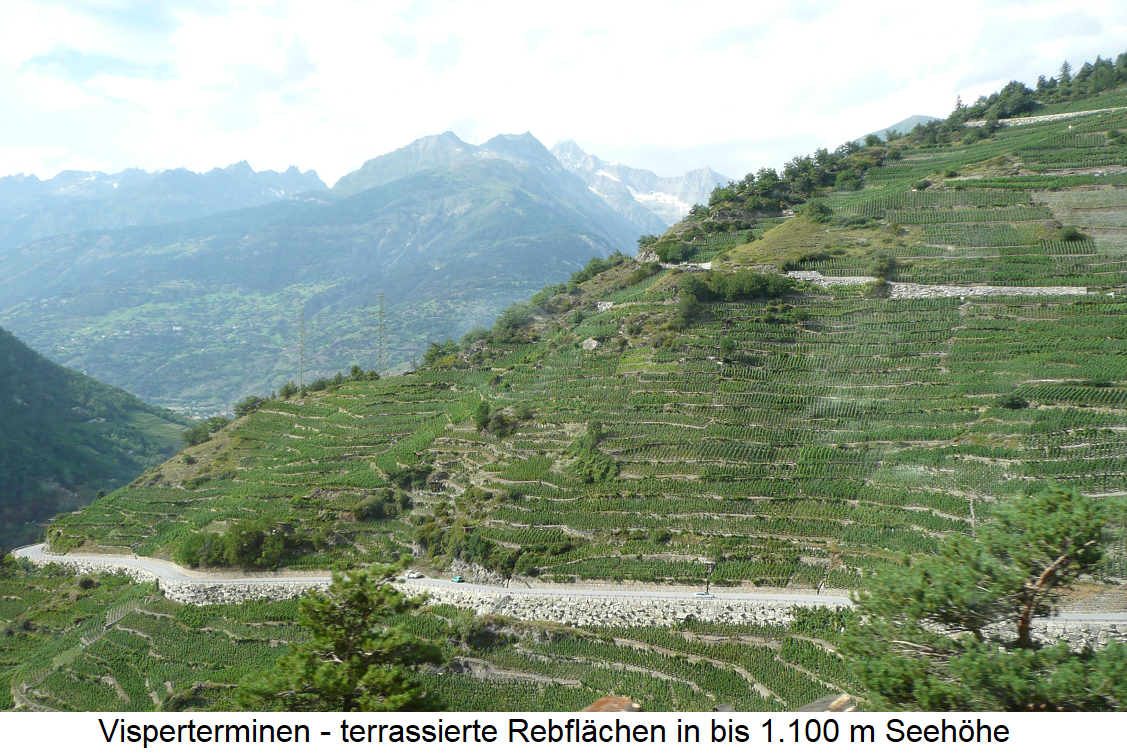 highest vineyard - Visperterminen terraced vineyards