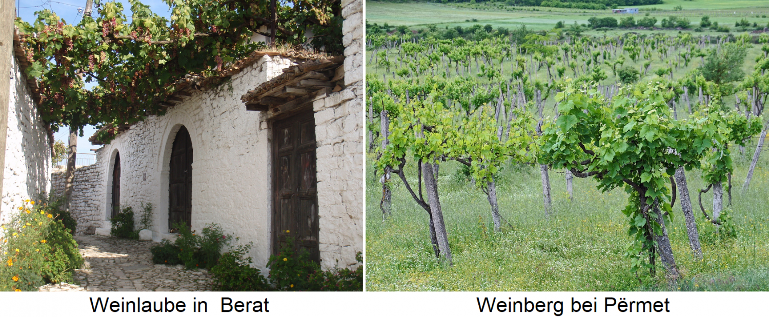 Albania - vine arbor in Berat and vineyard in Permet