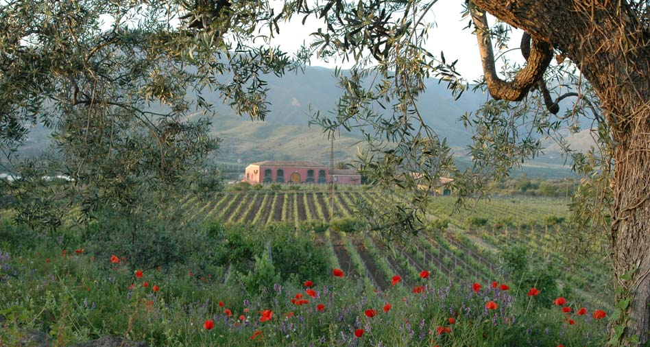 Tenuta delle Terre Nere - winery building surrounded by vineyards