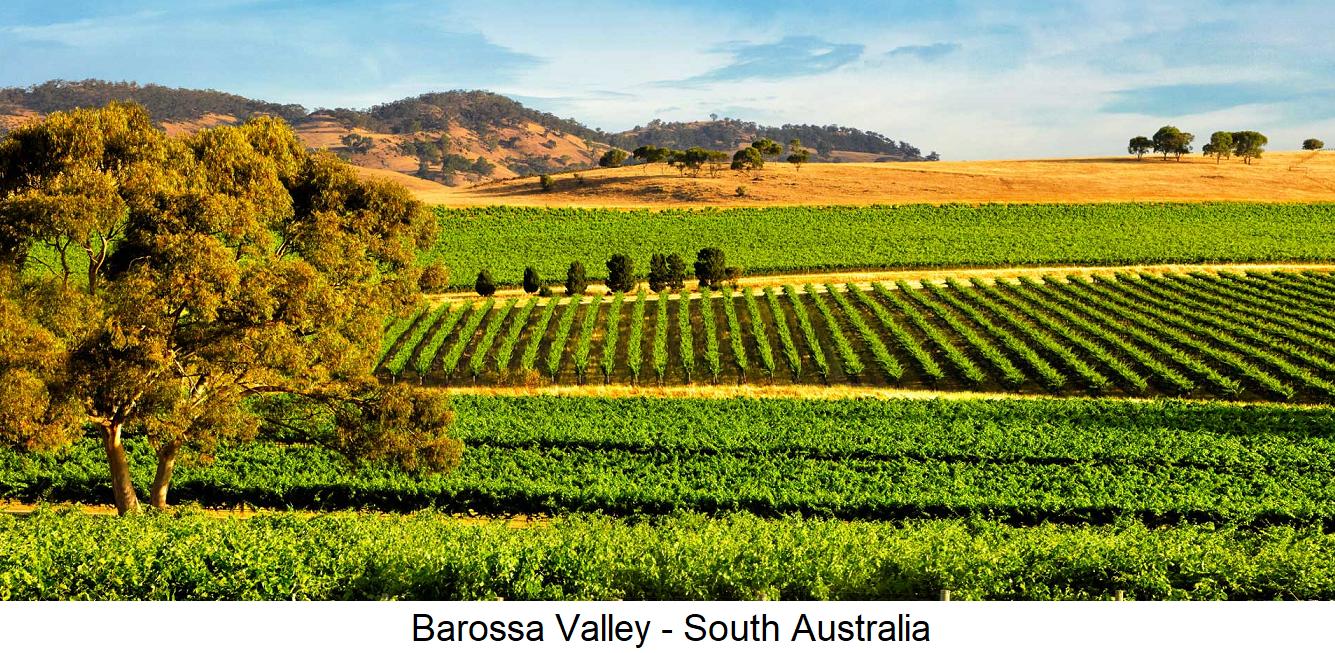 Barossa Valley - Vineyards