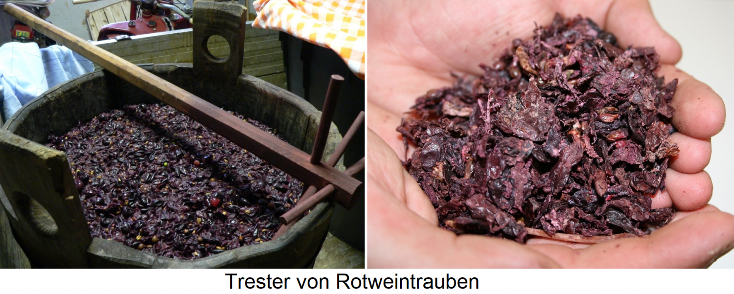 Grapes of red wine grapes - in the vat and a handful