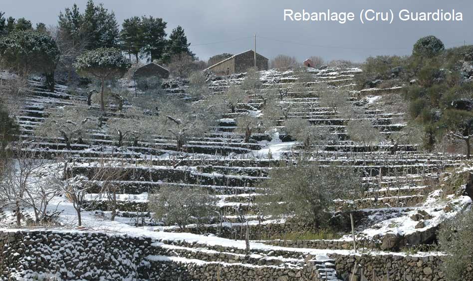 Tenuta delle Terre Nere - Guardiola vineyards