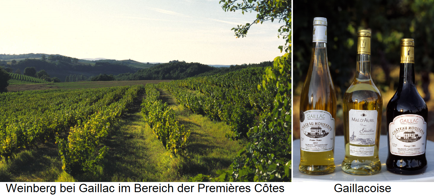 Gaillac - vineyard and bottles