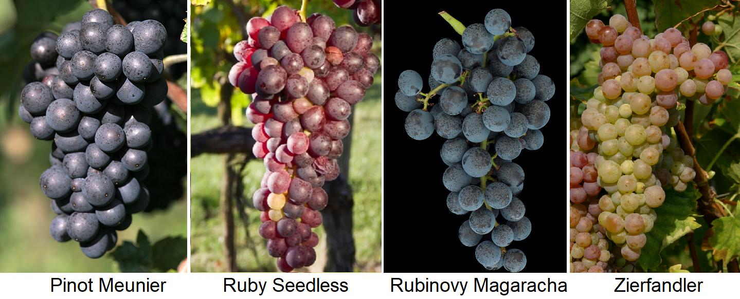 Rubin - Pinot Meunier, Ruby Seedless, Rubinovy Magaracha, Zierfandler