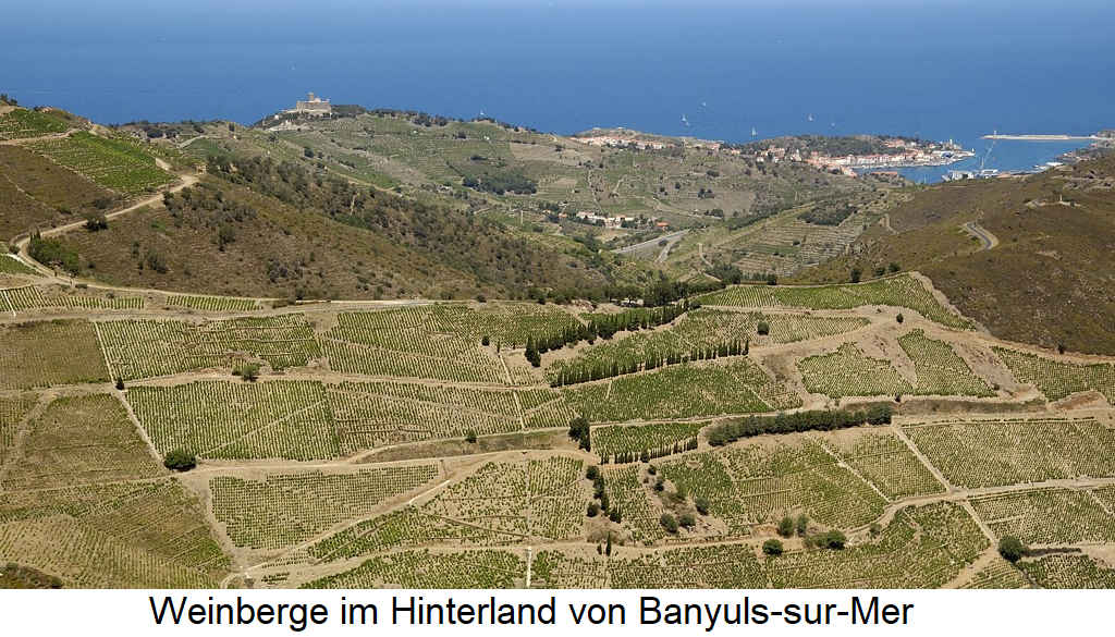 Vineyards in the hinterland of Banyuls-sur-Mer