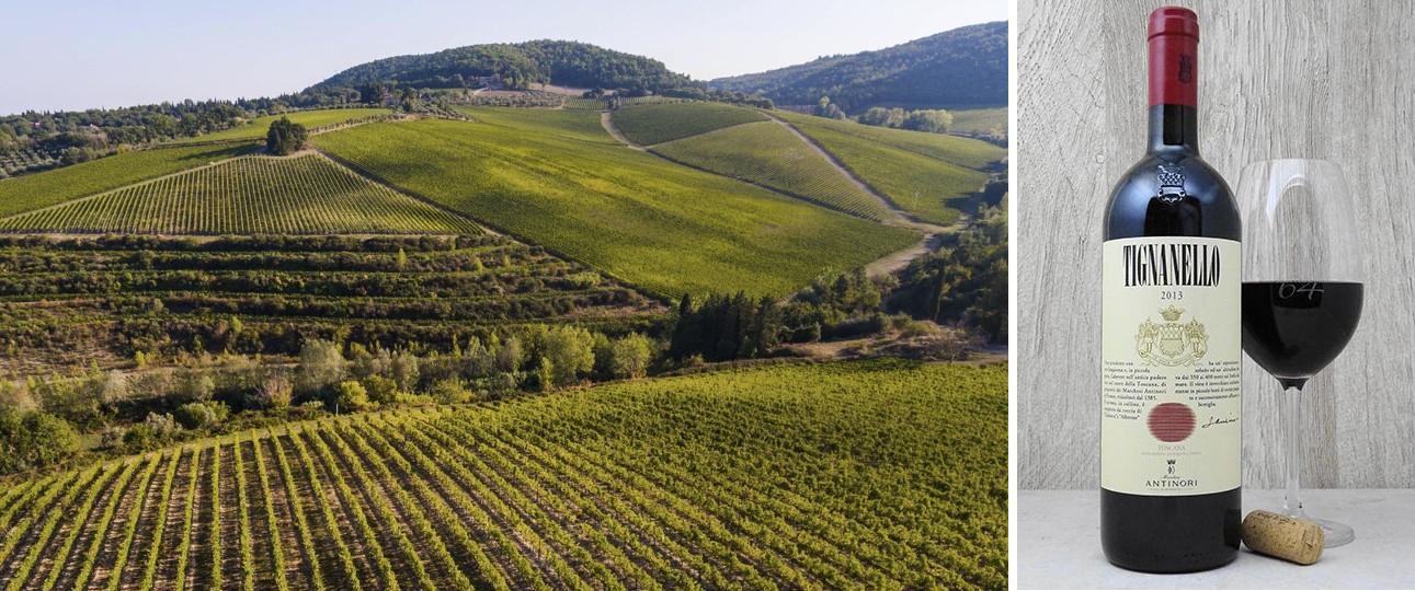 Tignanello - Weinberge und Flasche