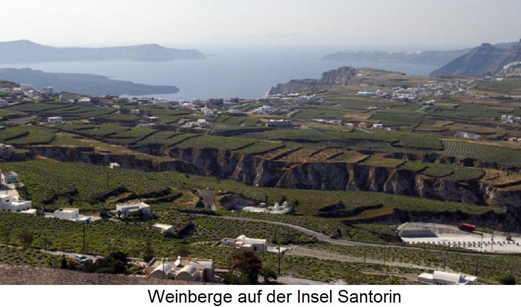 Vinsanto - Vineyards on the island of Santorini